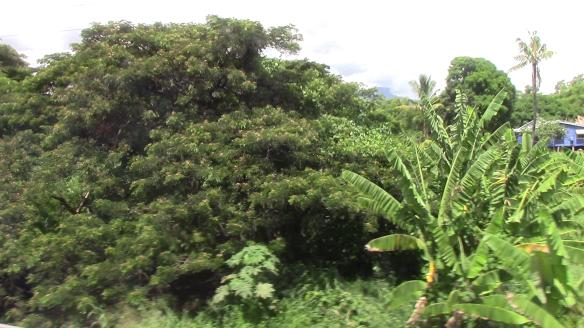 95_Fiji200017